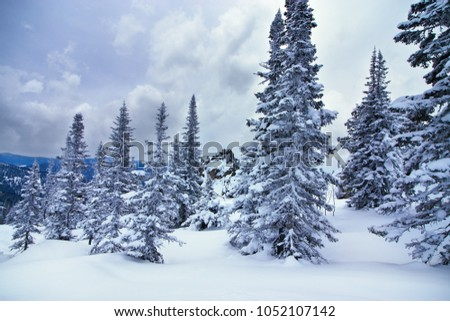 Winter forest in Siberia. Snow-covered trees on the slopes of Mount Utuya. Ski resort Sheregesh. Kemerovo Region. Russia. 2018, March.