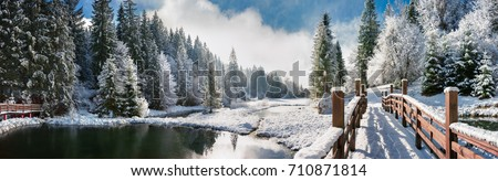 Winter forest in the Carpathians on Lake Vito