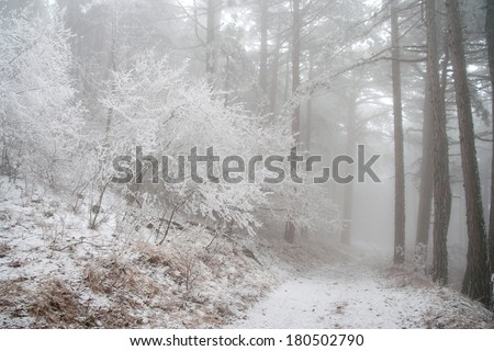 Winter forest in the fog