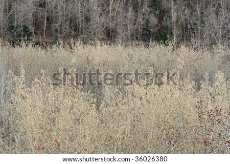 Winter forest in the north saskatchewan river valley, edmonton, alberta, canada