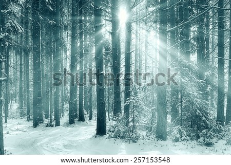 Stock Photo winter forest landscape monochrome