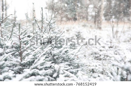 Winter forest. Landscape of winter forest on a sunny day. Snow-covered trees and Christmas trees in the forest. Branches under the snow. Bad snowy weather cold day. #768152419