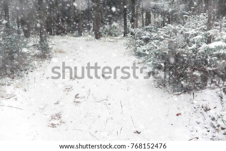 winter forest. landscape of...