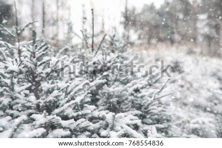 Winter forest. Landscape of winter forest on a sunny day. Snow-covered trees and Christmas trees in the forest. Branches under the snow. Bad snowy weather cold day. #768554836