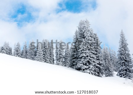 Winter forest on slope of mountains