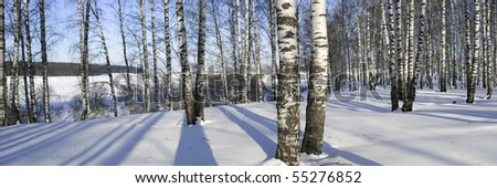 winter forest panoramic landscape 13
