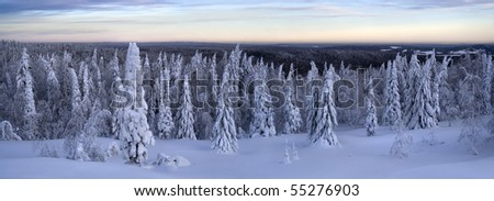winter forest panoramic landscape 4 - stock photo