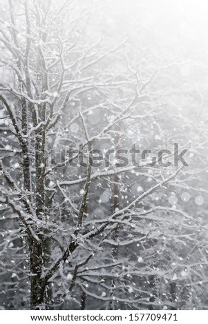 Winter Forest. Photo.