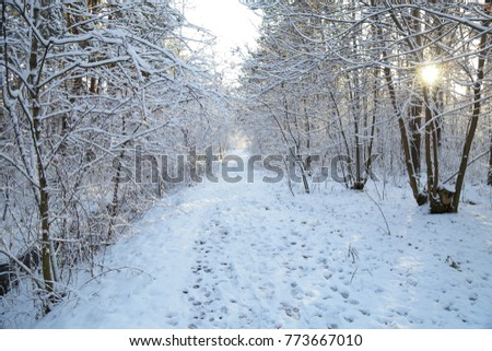 Winter, forest, snow. Snow-covered pine forest, trees in the snow, a beautiful winter landscape, nature.