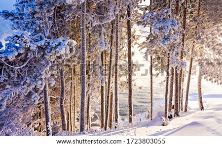 Winter forest snow trees view