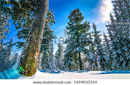 Winter forest snow trees view. Snow covered trees view. Winter snow forest trees. Winter snow forest background