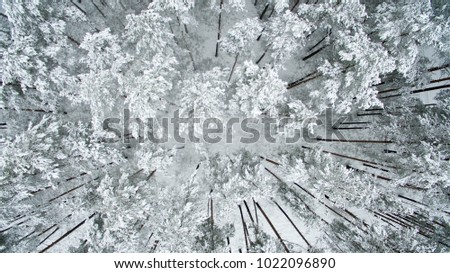 Winter forest. View from above. The photo was taken with a drone. Pine and fir forest in the snow.