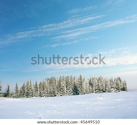 Winter forest with blue sky and clouds