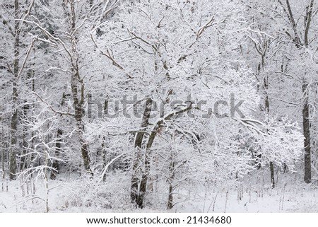 Winter forest with fresh snow, Yankee Springs State Park, Michigan, USA
