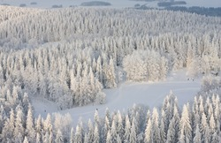Winter forest with frosty trees and skiers, aerial view. Kuopio, Finland
