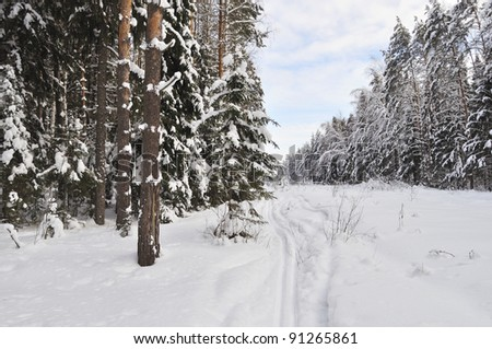 Winter forest with ski track, Russia - stock photo