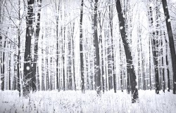 Winter forest with snow on trees and floor