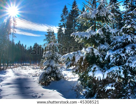 Winter Forest with Sunlight