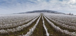 Winter frosty vineyard landscape covered by white flake ice near Harkany