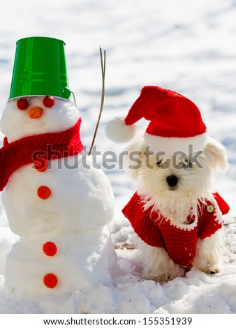Winter fun - cute puppy playing with snowman