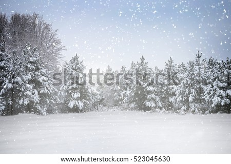 Winter holiday scene in snowing forest #523045630