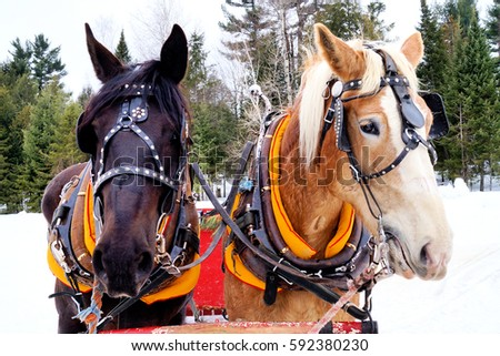 winter horses #592380230