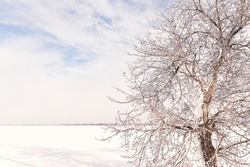 Winter idealistic landscape. A snow-white field covered with snow and a tree in sparkling ice.