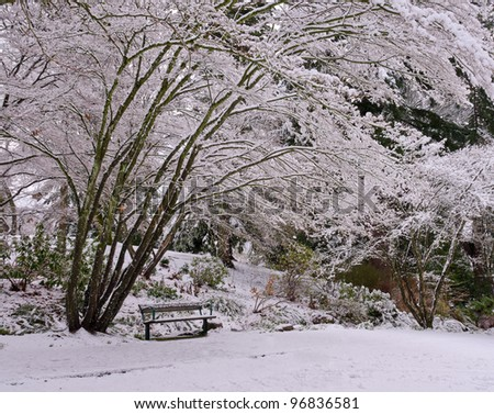 Winter in a park. Trees and bench covered with snow
