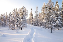 Winter in deep forest. Sunny frosty january.