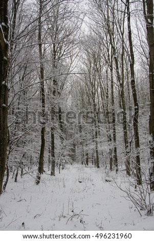 winter in forest #496231960