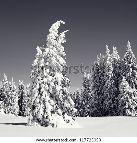 Winter in mountains covered with fresh snow. Black and white