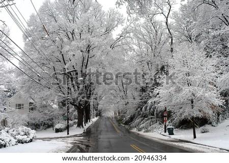 Winter in Palisades, Washington DC