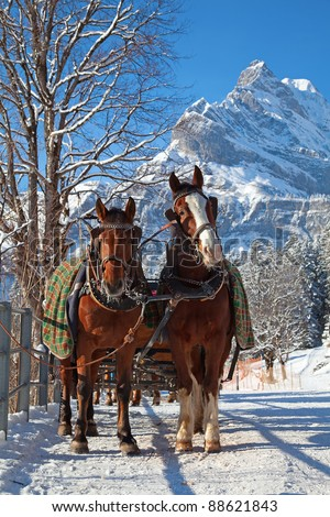 Winter in swiss alps (pair of horses in a small village)
