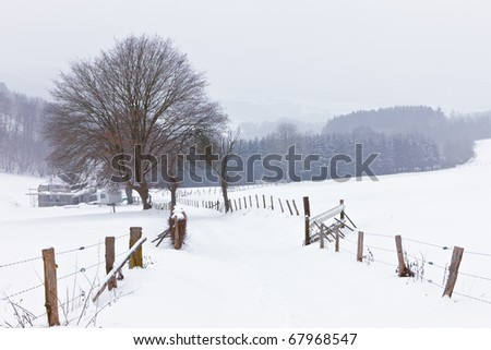Winter in the Ardennes