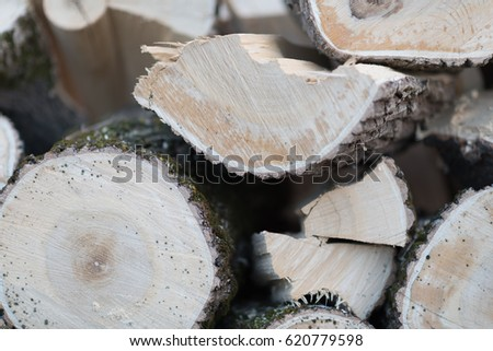 Winter in the forest. Felling in the forest, lumberjack chopping wood and gathering firewood for winter. Macro shot of freshly cut timber in trailer. Dry, emerald moss, snow, ice on bark in the woods #620779598