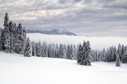Winter in the Jura mountains, Canton of Vaud, Western Switzerland