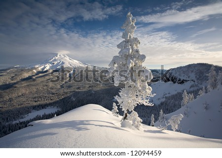 Winter in the Mount Hood National Forest