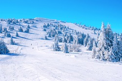 Winter Kopaonik, Serbia panorama of the slope at ski resort, people skiing, snow pine trees, blue sky