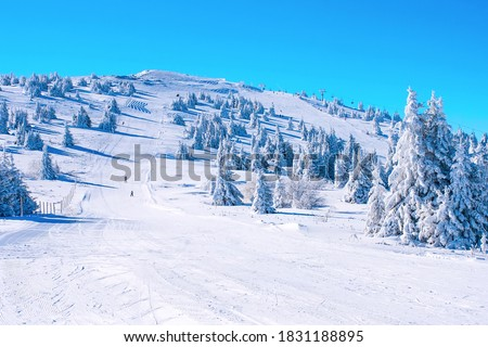 Winter Kopaonik, Serbia panorama of the slope at ski resort, people skiing, snow pine trees, blue sky Stock fotó ©