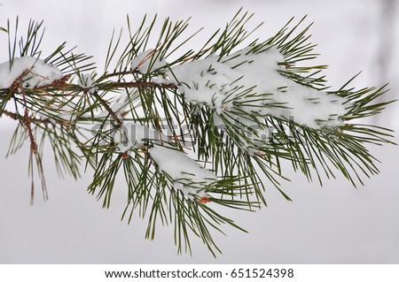 winter landscape #651524398