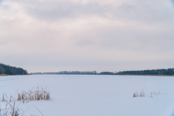 Winter landscape. A snow field or a large lake under the snow in front of a forest. In the foreground you can see marsh grass or cattails