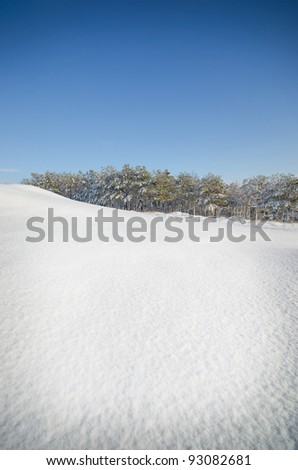 winter landscape against which the growing forest. natural composition