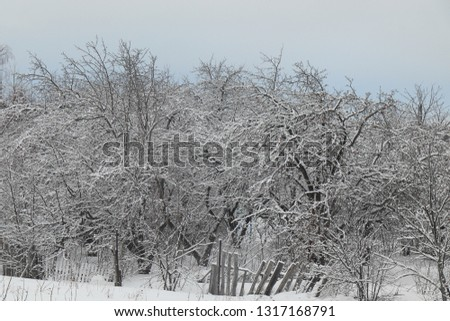 Winter landscape. Apple in the snow. All tree branches in the snow. You can see a small piece of blue sky.Rickety gray wooden fence.