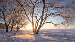 Winter landscape at sunrise. Snowy trees. Frosty nature. Trees with hoarfrost on lake shore covered by snow. Warm yellow sunlight. Beautiful winter natural scene