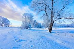 Winter landscape. Cold day.