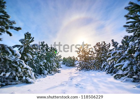 Winter landscape. Composition of nature.
