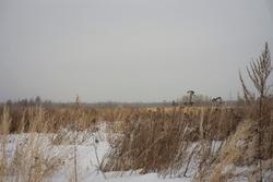 winter landscape-field and gray sky