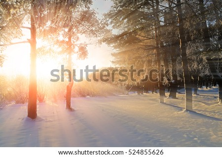 Winter landscape - forest nature under bright evening sunlight with frosty trees #524855626