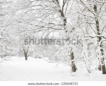 Winter landscape, forest with trees in snow.