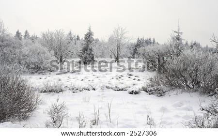 Winter landscape - ground covered by snow, white snowy tree branches